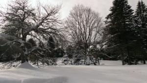 snowyscene.jpg