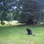 Our Feline Photo Shoot
