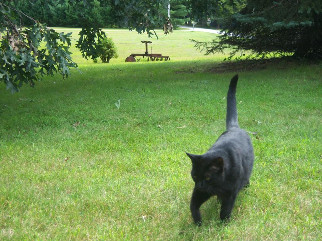 Merlin Lovecat