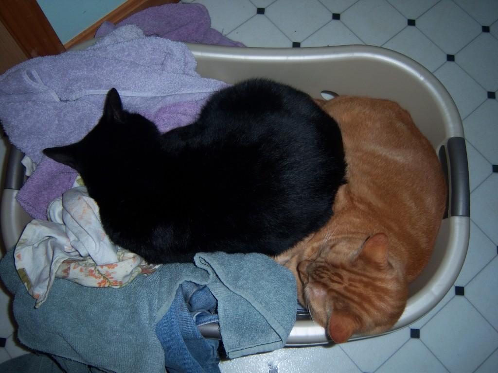 Laundry Basket Cats