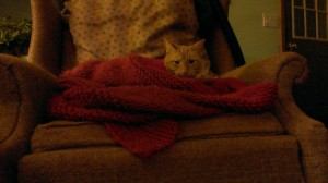 Percy loves the blanket ElvenTiger just finished knitting.