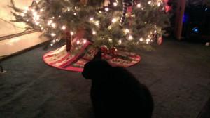 Merlin enjoying the tree.