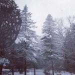 Starcat's Favorites: Barefoot In Winter