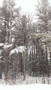 snowday16
