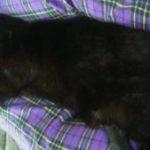 Starcat's Favorites: Kitty Snuggles
